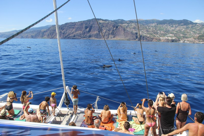 Catamaran trip - Whale watching