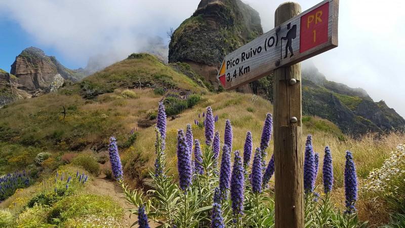 Private VIP Service Walking Hiking Vereda Pico Areeiro - Pico Ruivo Round Trip