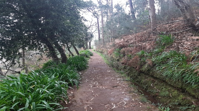 Private Service VIP Levada da Serra do Faial – Camacha Walk