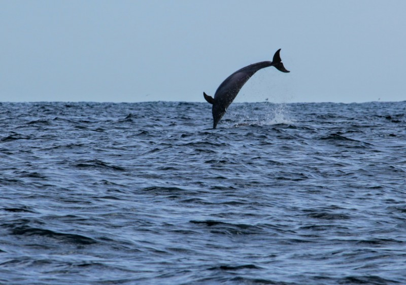 Dolphin, Whale & Turtle Watching