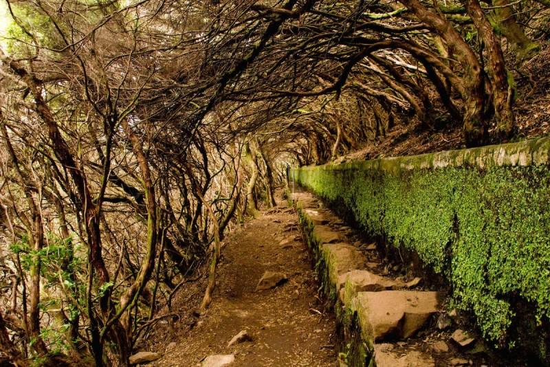 Levada Walk Rabaçal - 25 Fontes