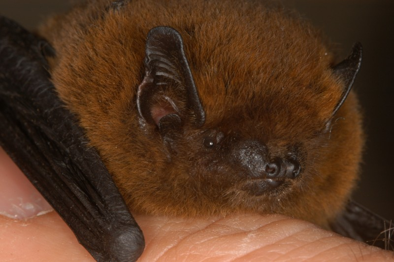 Bat Watching & Conservation